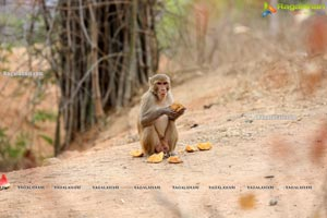Volunteers Feed Hungry Monkeys