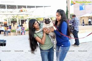 Hyderabad Dog Show
