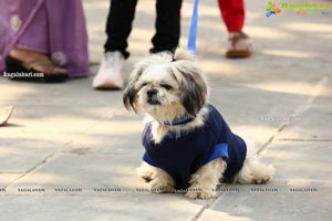 Petzo App, Everything for Pets