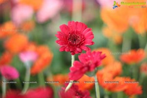 Horticulture Expo 2017