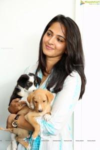 Anushka with Pet Dogs
