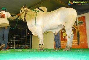 The Dream Bull Show