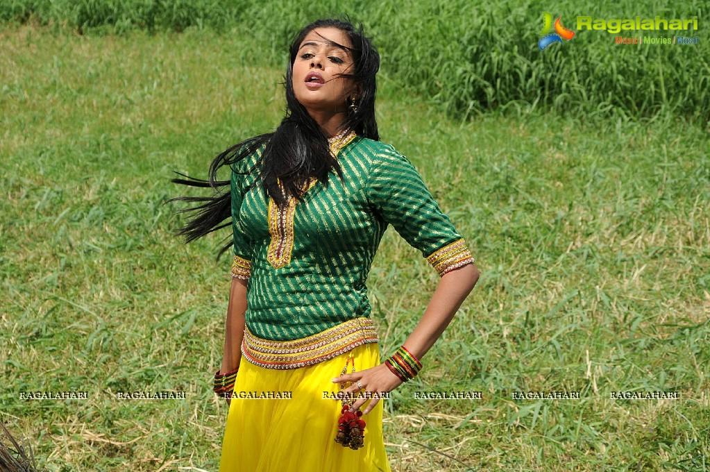 Priyamani Dancing Stills in Paddy Fields, Photo Gallery