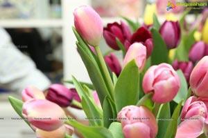 Tulip Festival at Champs Fleur