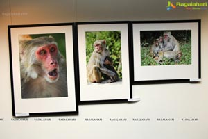 Wild Life Exhibition at Muse Nov 24th