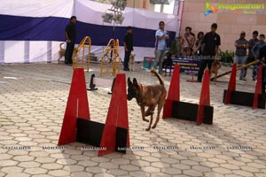 Dog Show at HITEX