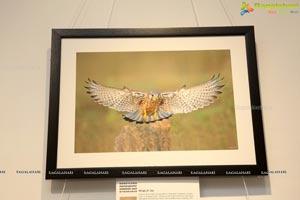 Honeycomb Photography Exhibition