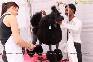 Andhra Pradesh Kennel Club