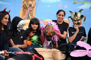 Dogs Halloween party by IXORA Corporate Services